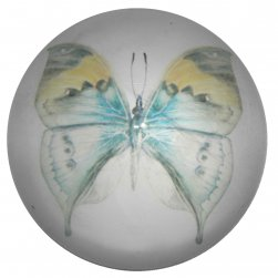 Dome Paperweight - Butterfly