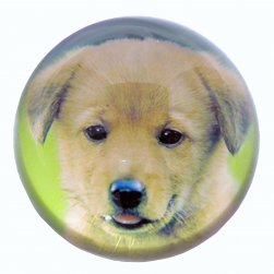 Dome Paperweight - Puppy