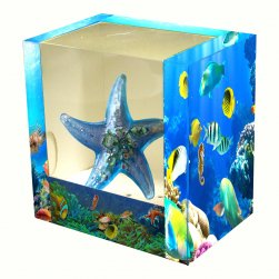 Star Fish, Light Blue with Display Box